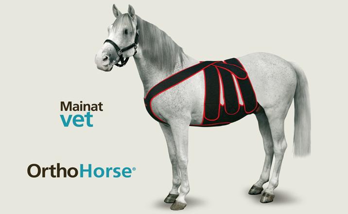 MainatVet_Horse1